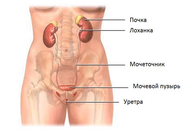 Остеохондроз пояснично-крестцового отдела позвоночника последствия