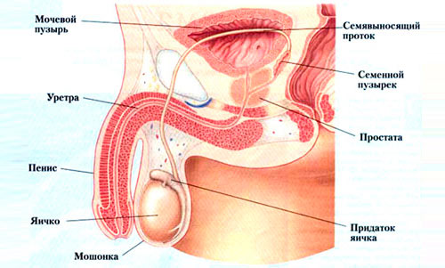Список препаратов при лечении ангины