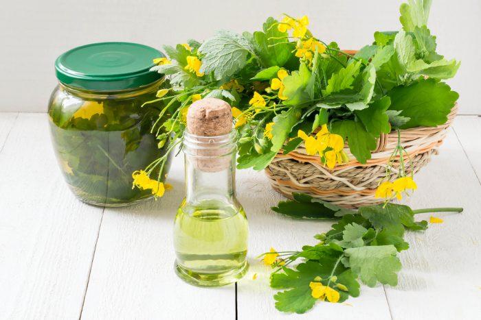 Сок чистотела лечебные свойства и противопоказания рецепты