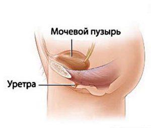 urinrøret på en kvinde